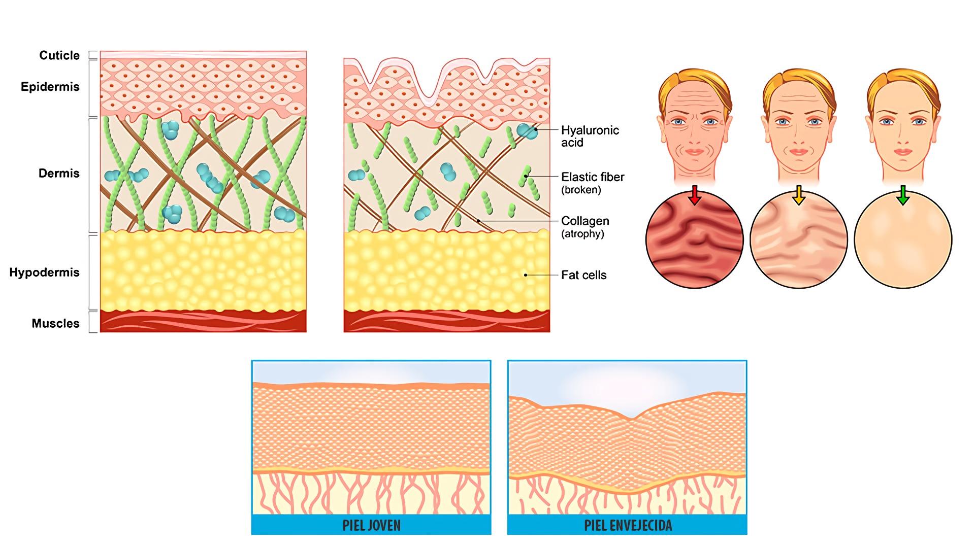 mejor crema antiarrugas que existe