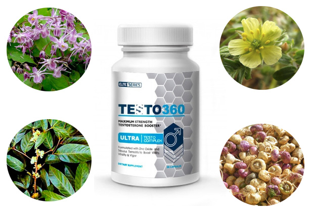 testo 360 ingredientes